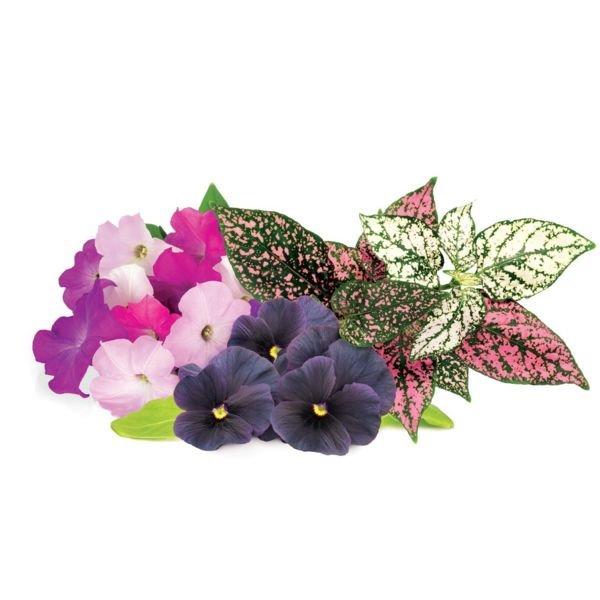 Smart Garden Mix kvetín 3-pack