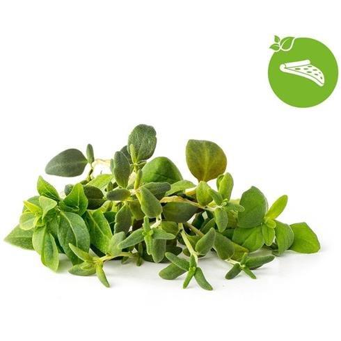 Smart Garden Mix talianských bylín 3-pack